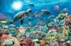 Meeresschutzgebiet: Korallenriff