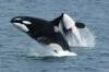 Meeresschutzgebiet: Sealife
