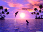 Delfini al tramonto - Delfin