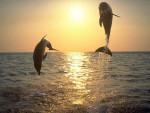 vde - Delfin (9 Monate)