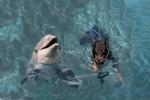 Rea & Dolphin - Delfin (1 Jahr)