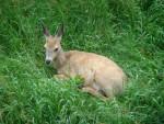 féline - Gazelle (2 Jahre)