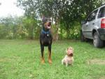 Dackota Y Mai - Hund (3 Jahre)