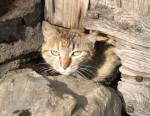 Meow ! - Katze