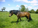 Belle - Pony (6 Jahre)